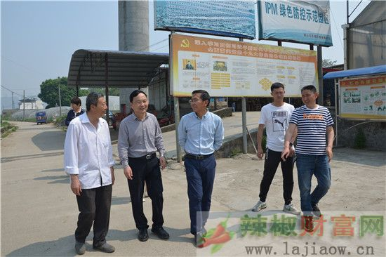 农科院专家指导四川辣椒种植生产