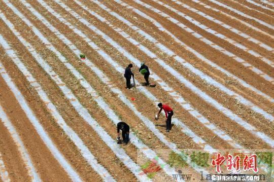 山西沁县扶持辣椒产业促进村民增收