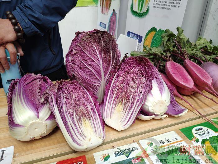 中国(曲周)蔬菜种业博览会新优品种精彩纷呈