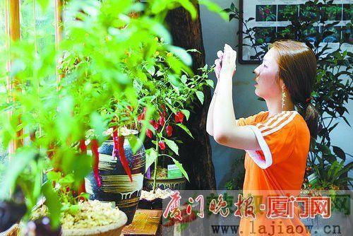 厦门植物园举办首届辣椒属植物展 135个品种扎堆亮相