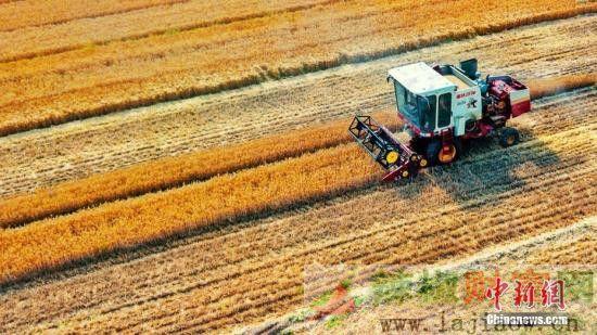 农业农村部:上半年农产品市场运行保持基本平稳