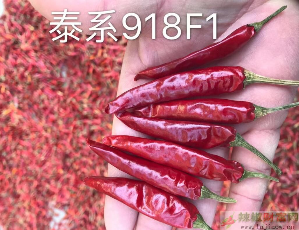 辣椒7.jpg