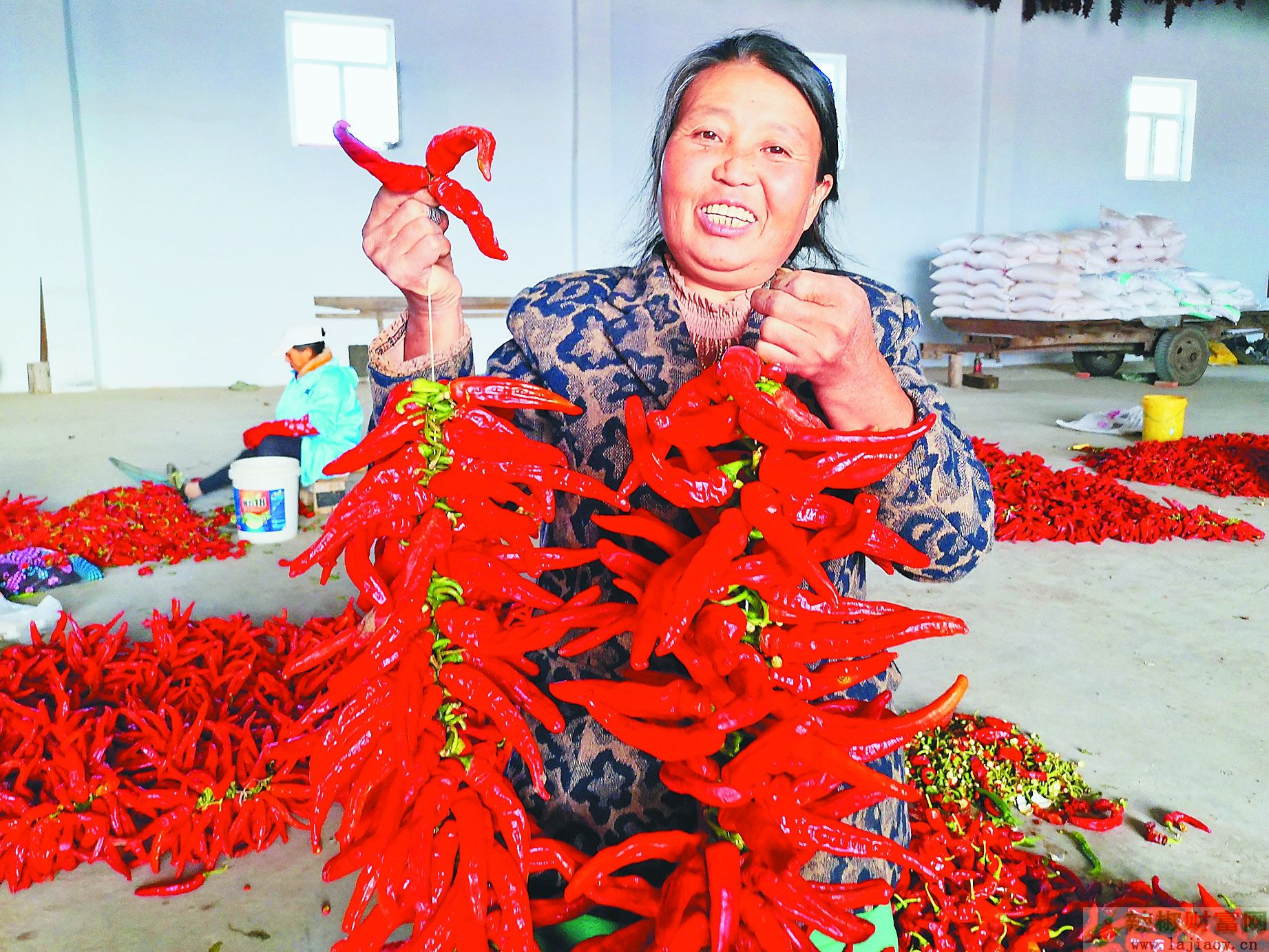 黑龙江红辣椒带火扶贫产业